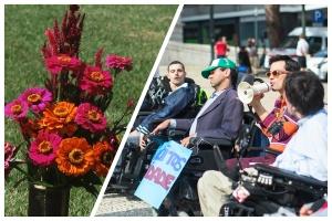 Fotocollage - Links Grabblumen - rechts Menschen mit Behinderung bei einer Demo