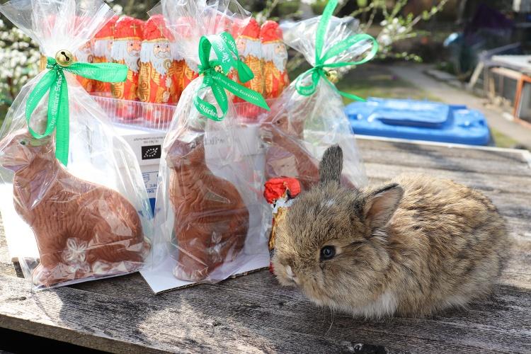 Das Kaninchen der Familie Christenn sitzt neben einigen Schokoosterhasen in der Sonne