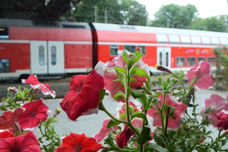 Züge gucken. Vom Aufenthaltsraum kann man den Bahnen hinterher schauen.