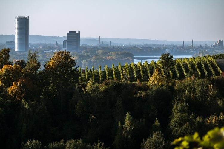 Skyline von Bonn mit Posttower (Foto: pixabay)