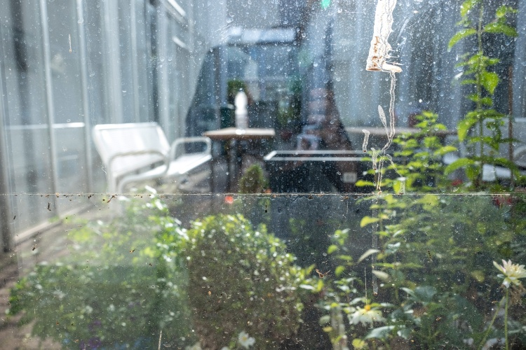 Blick in den Garten aus dem Apartement von Helga Wallraf